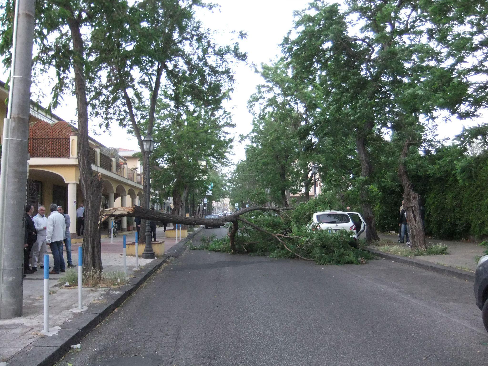 albero-via-garibaldi