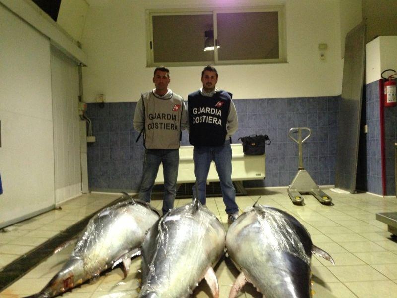 Sequestro tonno rosso 13-07-2013