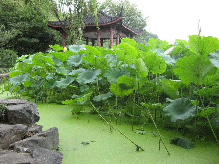 Stage di Chi Nei Tsang 11-12 Luglio