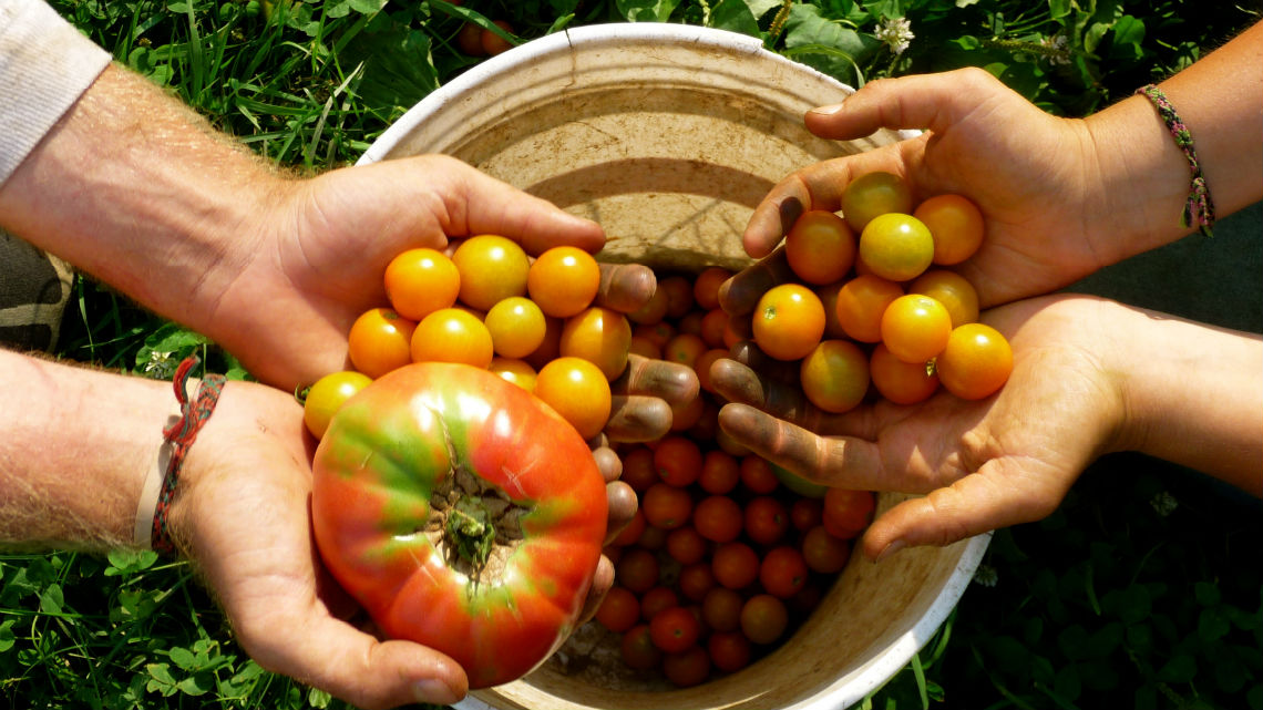 Agricoltura biologica, in Sicilia il 18% delle aziende italiane. Boom bio tra i giovani agricoltori